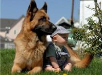 La convivencia entre niños y perros
