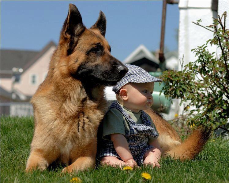 Photo of La convivencia entre niños y perros