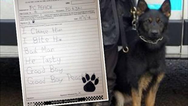 Perro Policía obligado a Declarar