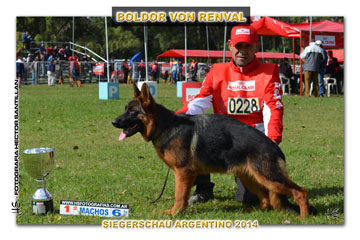 Boldor 1094 Sieger 14