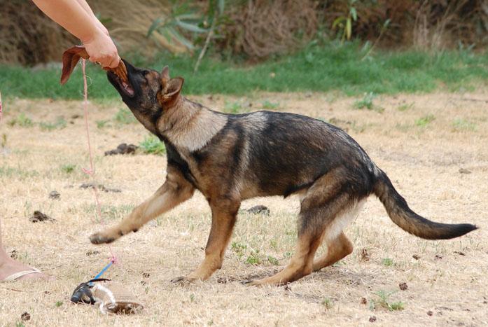 Photo of ¿Cómo debo jugar con mi perro?