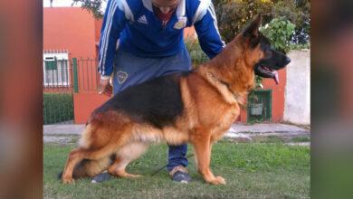 Photo of Inca Leute Des Südens