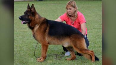 Photo of Xonny Von Schönnberg